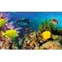 Crédence de cuisine fonds marin avec poissons et coraux