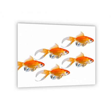 Crédence de cuisine blanche cinq poissons rouge
