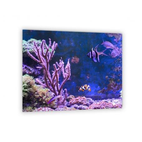 Crédence de cuisine effet fonds marins, poissons et coraux : indigo, bleu